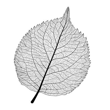 Blatt isoliert . Vektor-Illustration