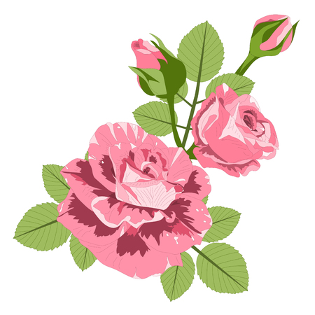 Roses with leaves isolated on a white background. Vector illustration. EPS 10 Illustration