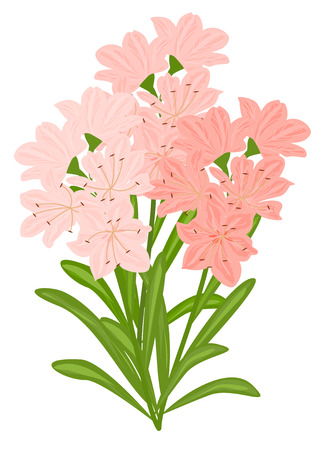 greating card: Color lily flowers on white background. Vector. EPS 10. Illustration