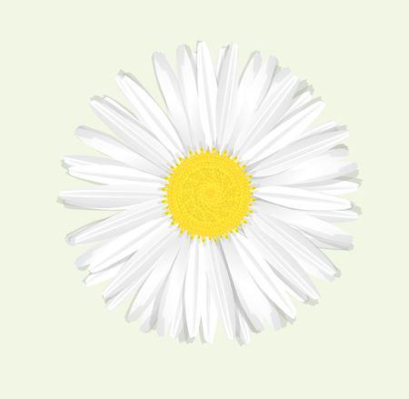 daisyflower: Beautiful chamomile flower isolated. Vector illustration. EPS 10