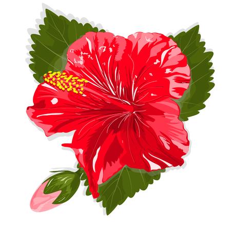 pistil: Beautiful hibiscus flower. Vector illustration. EPS 10