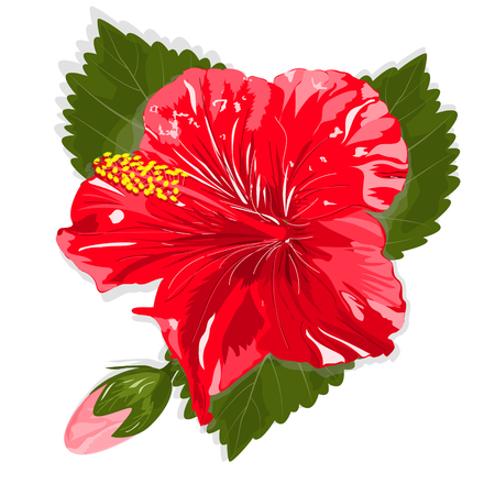 Beautiful hibiscus flower. Vector illustration. EPS 10