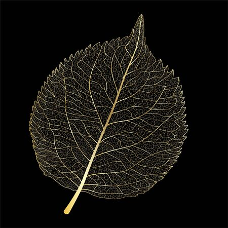 Leaf isolated. Vector illustration.