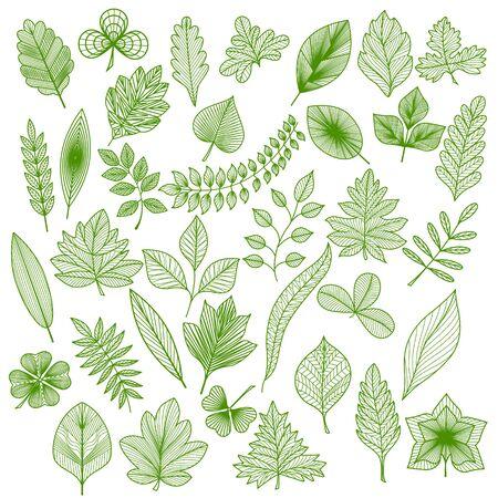 Set of green leaf.