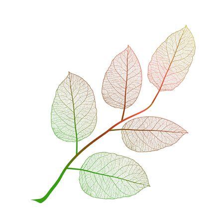 Leaf isolated.