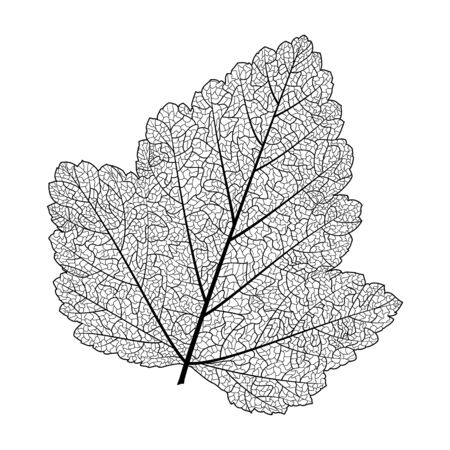 Leaf isolated. Vector illustration. Çizim