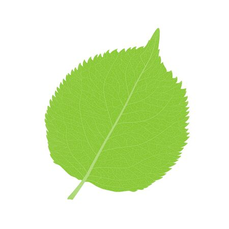 Leaf isolated. Vector illustration. Stok Fotoğraf - 135356556