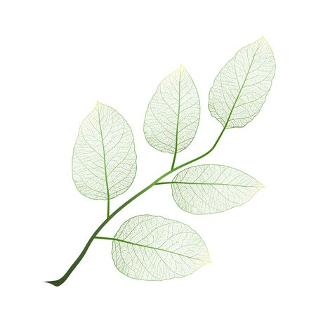 Leaf isolated. Vector illustration. Stok Fotoğraf - 135356592
