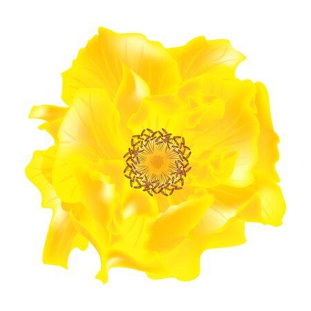 Beautiful Rose flower isolated on white background. Çizim