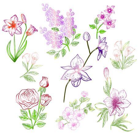 Set of flowers isolated on white background.