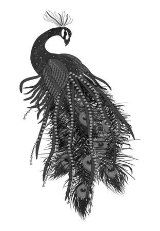 Beautiful peacock black on white.