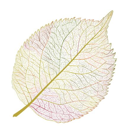 Leaf isolated. Vector illustration. Illusztráció
