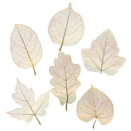 Set colored autumn leaves on white. Stok Fotoğraf - 148959318