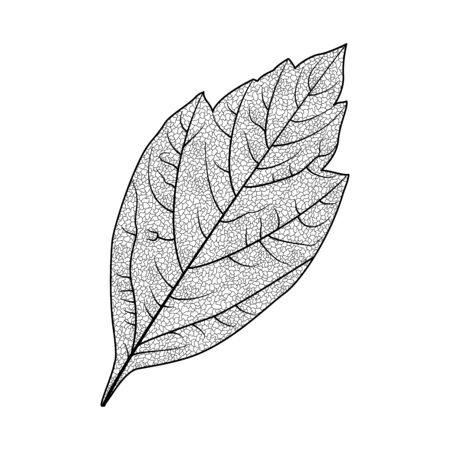 Leaf isolated on white Stok Fotoğraf - 148959327