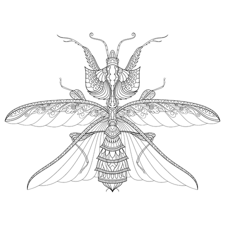 Vector Drawing of Devil's Flower Mantis Or Idolomantis Diabolica. King Mantis Isolated On Transparent Background