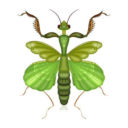 Vector Decorative Indian Flower Mantis Illustration