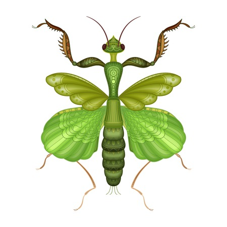 Vector Decorative Indian Flower Mantis 矢量图像