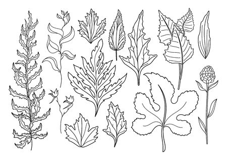 Vector Set Of Art Foliage Natural Leaves Herbs. Objects Wildlife. Decorative Isolated Objects. Illustration For Design