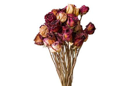 flores secas: Ramo de flores secas. Marchita se levantó en un fondo blanco