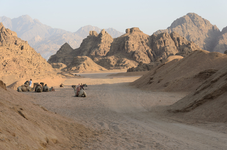 sinai desert: Desert in Africa. ATV safaris. Excursions in Egypt.