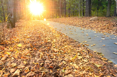 fall trees: Beautiful evening scene in autumn park with sun rays Stock Photo