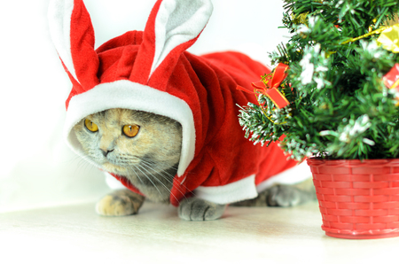 christmas costume: Christmas cat dressing up in red rabbit costume and sitting near Christmas tree