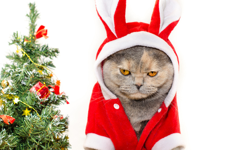 cats: Sad christmas cat dressing up in red rabbit costume Stock Photo