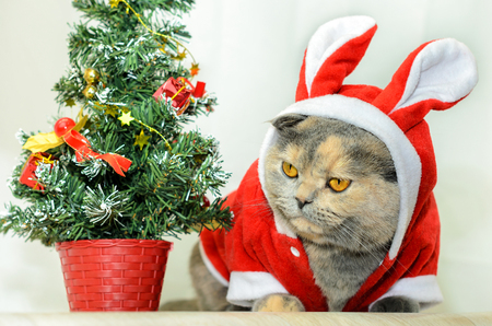 Christmas cat dressing up in red rabbit costume and sitting near Christmas tree