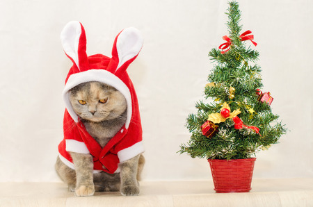 stuffer: Sad christmas cat dressing up in red rabbit costume and sitting near Christmas tree Stock Photo