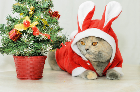 stuffer: Christmas cat dressing up in red rabbit costume and sitting near Christmas tree
