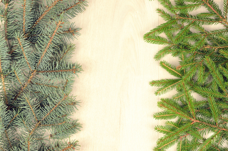 branches of two  varieties spruce on a wooden background