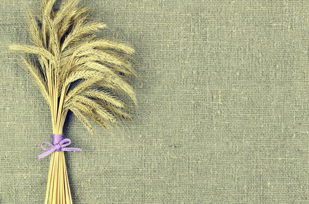 corded: Sheaf of wheat ears on linen canvas background. Harvest concept