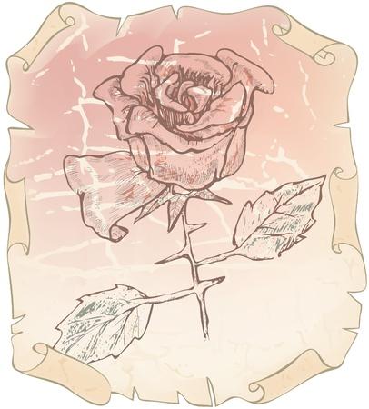 herbarium: Old drawing roses on paper erased  Illustration