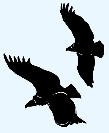Eagle soars in the sky Vector