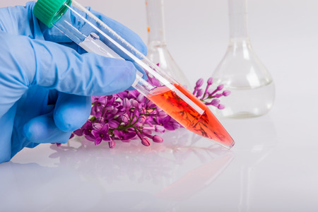 extraction of natural ingredients in perfumery Standard-Bild