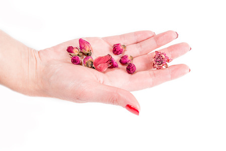 hand with pink buds, spa theme photo