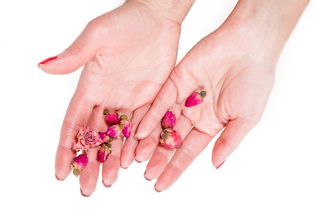 Womens hands holding pink buds, spa theme photo