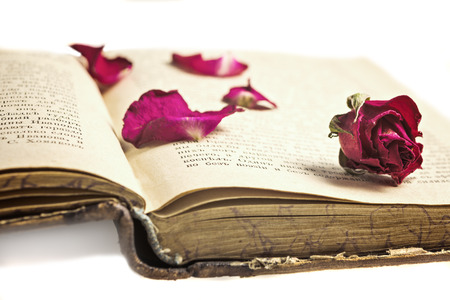 Dried roses  with petals on the old  russian book Stock Photo