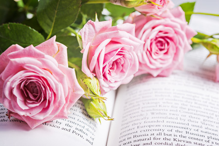 Pink roses on the book pages