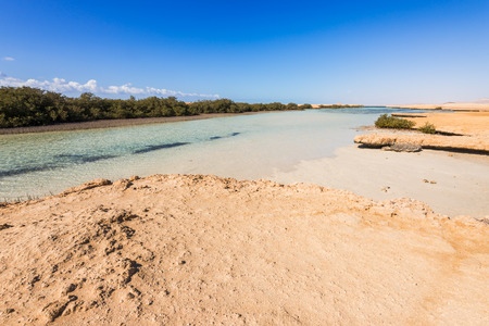 mohammed: Panoramic view of mangroves in the Ras Mohammed, Sinai, Egypt
