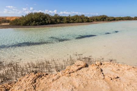 sharm el sheikh: Mangroves in the national park of Ras Mohammed, Sharm el Sheikh