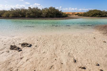 sharm el sheikh: Mangroves in the national park of Ras Mohammed, Sharm el Sheikh, Egypt