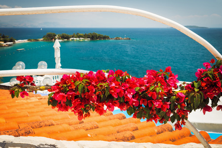 bougainvillea flowers and the view on the sea, Dassia, Corfu. Greece