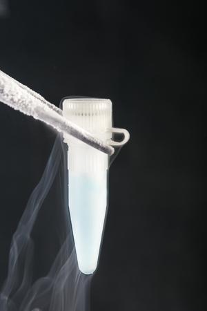 espermatozoides: científico de la celebración cryosample en la batería de nitrógeno líquido. Espermatozoides y células madre de almacenamiento Banco