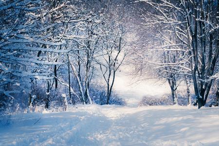 Winter landscape in snow forest. Alley in snowy forest Standard-Bild