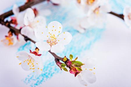 apricot blossom branch over paper. Фото со стока