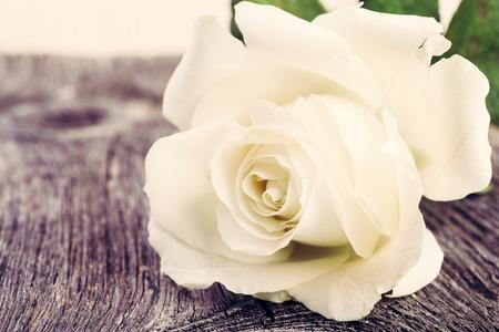 White rose on vintage wooden background. Floral frame background