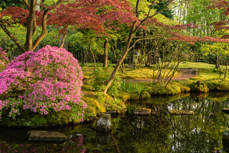 Beautiful Japanese garden in spring, Den Haag, Holland Stock Photo