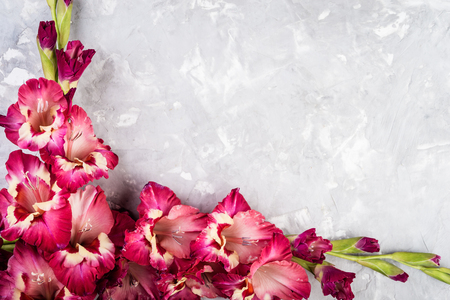 Pink gladiolus flower on grey background, flat lay style, copy space