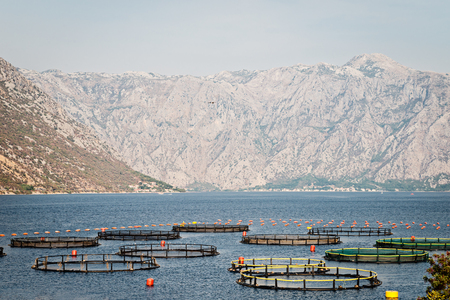 Cages For Fish Cultivation. Fish Farming On The Sea, Montenegro ...